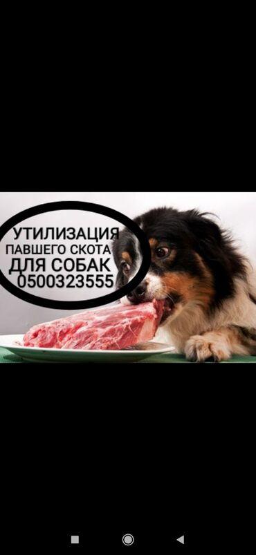 С/х животные - Кыргызстан: Заберу для собак