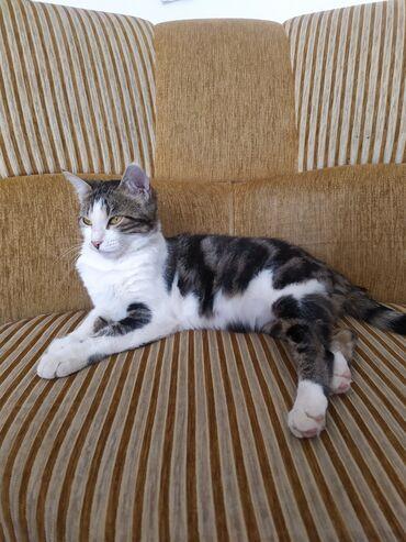 Животные - Чолпон-Ата: Отдам Кошку в хорошие руки !!! Нашли кошку в замученном состоянии се