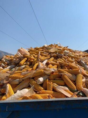 10920 объявлений: Кукуруза 🌽🌽🌽 есть доставка по беловодску 30т
