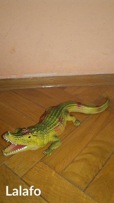 Krokodil - Kraljevo