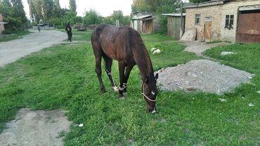 Лошади, кони