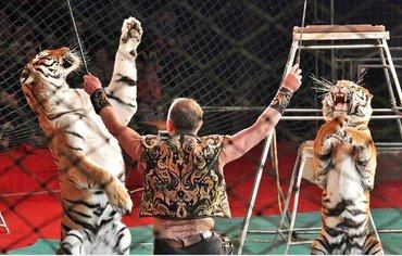 Требуется дрессировшик в цирк gen.обязанности на отлично выполнять сво в Бишкек
