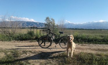 Собаки в Бакай-Ат
