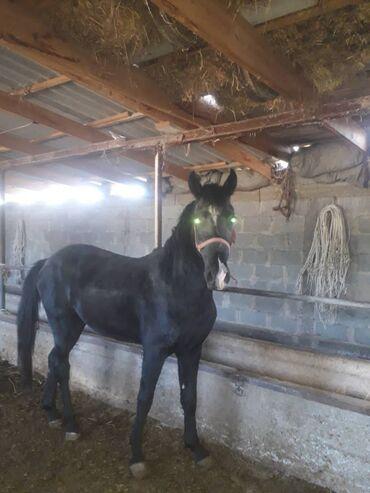 Продается лошадь по всем вопросом звоните по тел