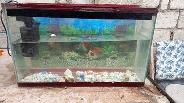 16 elan | HEYVANLAR: Akvariumlar