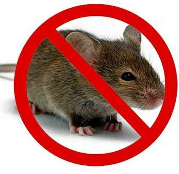 Дератизация!!!!! Уничтожения грызунов в Бишкек