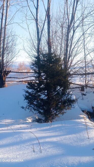 бу морозильная камера в Кыргызстан: Продам с ичке булун