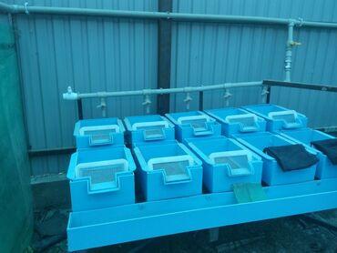 31 объявлений | ЖИВОТНЫЕ: Продается инкубационные аппараты для форели.Цена договорная.Тел