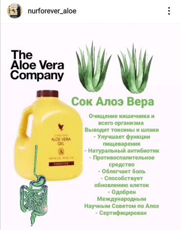 dezodorant aloje vera в Кыргызстан: Натуральный сок Forever Aloe Vera GelПо своей структуре сок идентичен