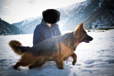 Вязка (на фото моя собака, не картинка). в Токмак