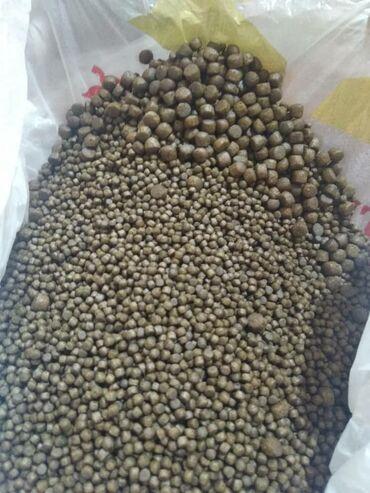 10927 объявлений: Корм для фореля производства Иран за кг