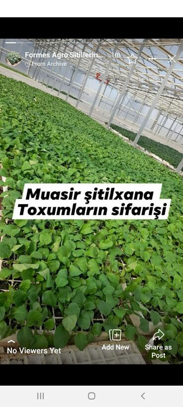 Ev və bağ üçün hər şey - Azərbaycan: Toxumlar və çöl bitkiləri