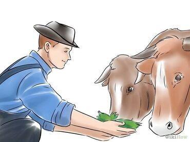 работа за городом с проживанием in Кыргызстан   ПОВАРА: Нужен Работник на ферму по уходу за скотом с проживанием питание можно
