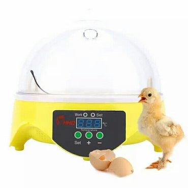 Xırdalan şəhərində Mini inkubator(110V-220V)