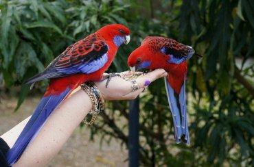 Попугаи разных видов от 600 в Бишкек