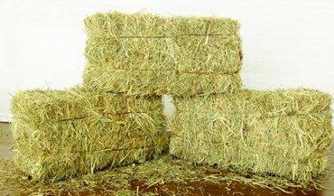 колпачки на когти кошкам в Кыргызстан: Продаю тюки сено клевер на складе в розницу. Сокулук. Есть доставка! Н