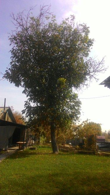 продаю дерево орех, самовывоз в Бишкек