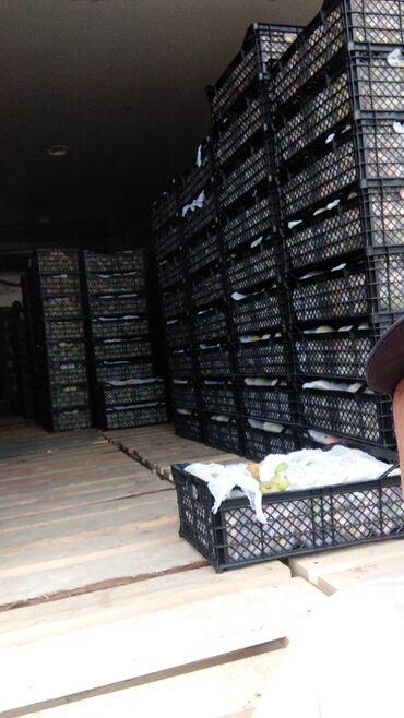 Услуги - Ананьево: Заготовка кылып беребиз абрикос алчулар болсо кайрылгыла фура толтуруп