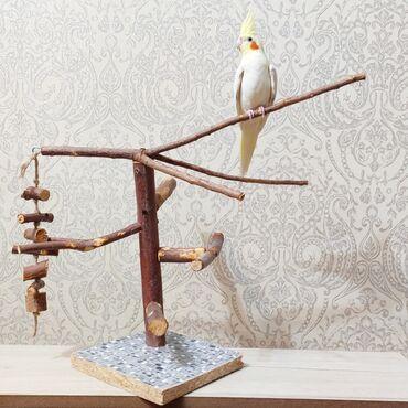Игровой стенд для попугая.Если вы видите объявление, значит актуально