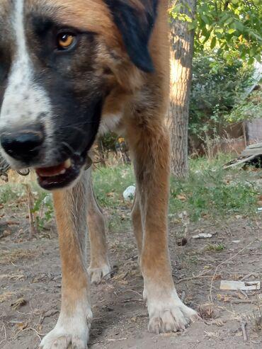 22 объявлений: Собаки