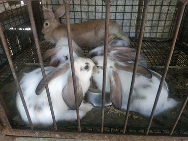 Кролики 2 месячные и 3 месячные
