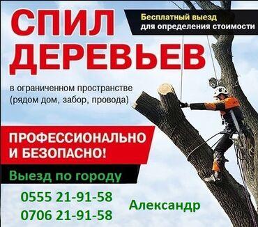 Бытовые услуги - Кыргызстан: Спил деревьев любой сложности а также распиловка деревьев на