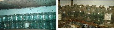 стекляные банки в Кыргызстан: Продаем стеклянные банки – 1 литр – по 10 сом, 3 литра – 25 сом