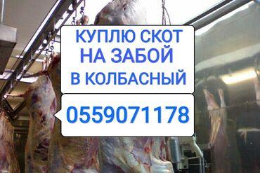 С/х животные - Кыргызстан: ПОСТОЯННО СКУПАЕМ СКОТ В КОЛБАСНЫЙ ЦЕХ: КОРОВ ЛОШАДЕЙ ТЕЛОК В ЛЮБОМ