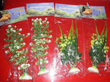 bitkiler - Azərbaycan: Suni bitkiler akvarium ucun bawqalarida var