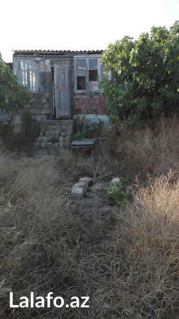 Bakı şəhərində Tecili olarax buzovna qesebesi viwnofka baglari indiki albali baglarin