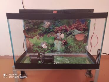 Akvarium 50l. Akvarium hava filtri ilə 80 manata satılır