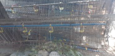 заказ авто из кореи в бишкек в Ак-Джол: Продаю клетки для кур. Заводские б/у. Есть поилки и кормушки. В
