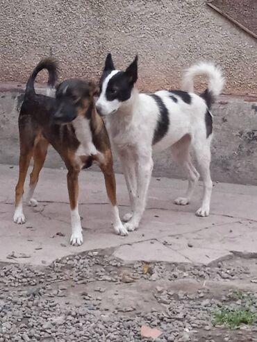 Фонд помощи Животным Добрые руки ищет добрые руки для собачек. Молодые
