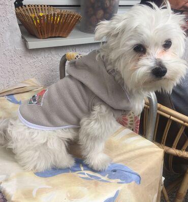 Kućni ljubimci - Srbija: Duks za male pse * Sa imenom Vašeg ljubimca ili klasican* NOVO*
