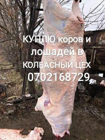животный-с в Кыргызстан: Куплю в колбасный цех скот в любом виде