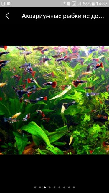 Рыбки в Бишкек