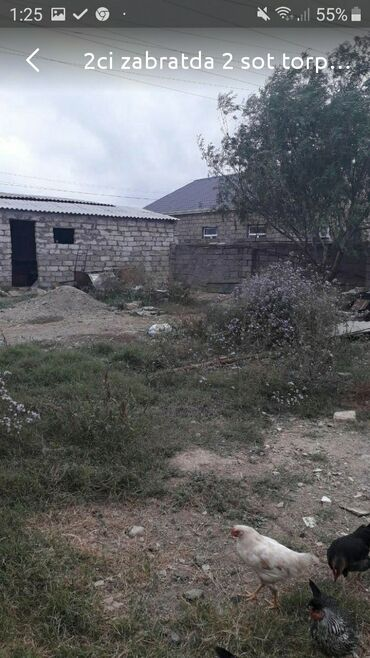 hektarla torpaq satilir - Azərbaycan: 2 sot, Tikinti, Kupça (Çıxarış)