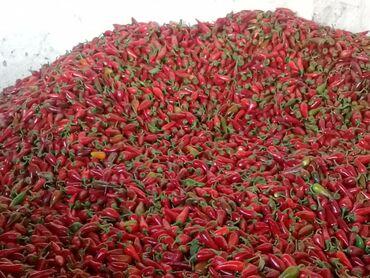 18 объявлений: Сладкий перец 20сом Горький перец 50 сом оптом продаем