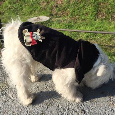 Deciji dzemper - Srbija: Duksevi za male pse - zanimljivi dezeni -NOVO-SADA I SA NOVOGODIŠNJIM