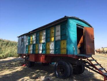 настольная плита мечта в Кыргызстан: Продаю бизнес!  Продаю пчелопавильон, рутовской системы, 44 улья трёх