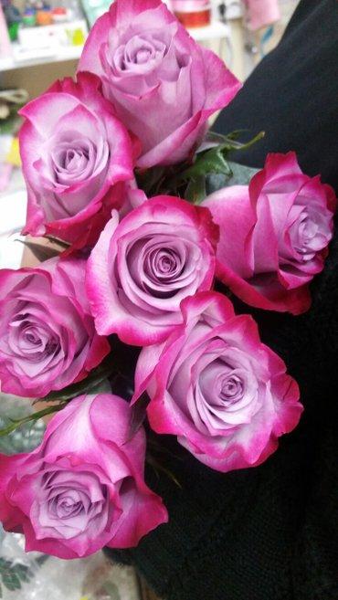 Розы голландия - удивите любимых красивым букетом! Мы находимся рядом в Бишкек