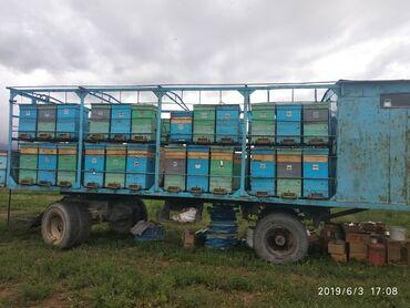 жилые вагончики бу в Кыргызстан: Пчелоплатформа на 54 семей. Продаю со всеми пчёлами и ульями улья в