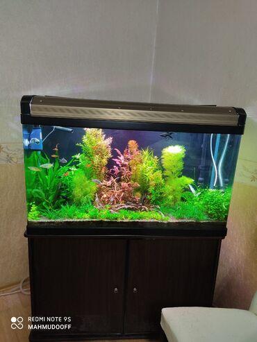 103 sm uzunu,37 sm eni,55sm hundurluyu. 210 litr su tutur.Akvarium