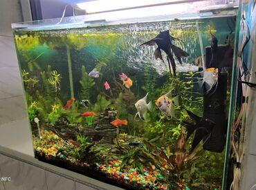 Аквариумы - Кыргызстан: Продаю аквариум около 200 литров  Грунт  Фильтр Градусник  Нагревате