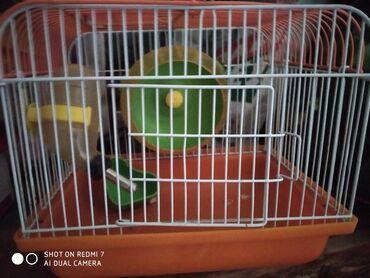 242 объявлений | ЖИВОТНЫЕ: Домик для хомяков. Клетка для хомяков. 300 сом. В городе