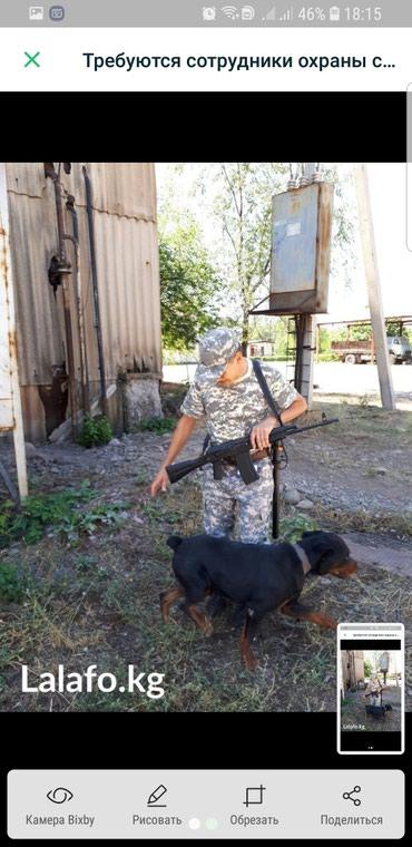 работа для офицеров в запасе в Кыргызстан: Требуются сотрудники охраны СБ в г. Кара Балта. график работы сутки