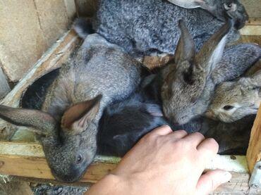 Продаю крольчат микс месячные по всем вопросам звонить