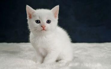 Очень хочу такого котёнка даром, желательно маленького,будет жить со
