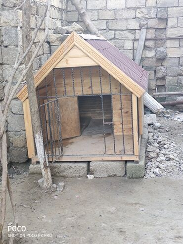 qarderob yuvası - Azərbaycan: İt yuvası