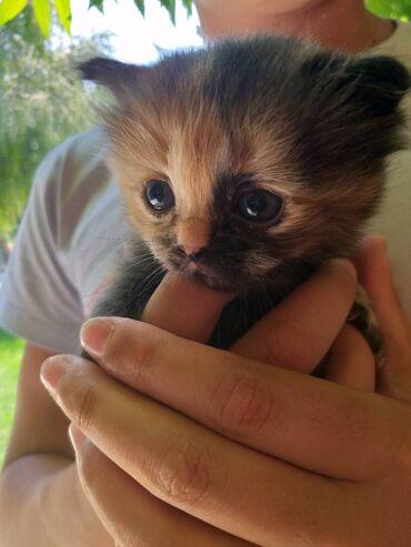 Животные - Шопоков: Котята в добрые руки